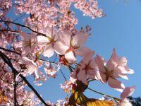 spring-s.jpg